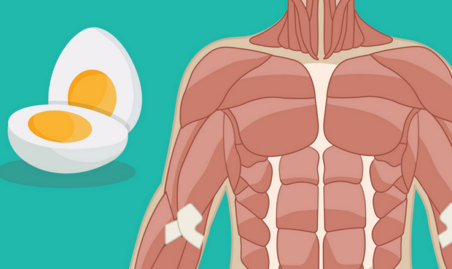 20 Positives That Can Happen To Your Life If You Start Eating 2 Eggs Daily